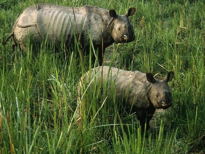 perierga.gr - 10 ζώα που κινδυνεύουν με εξαφάνιση!