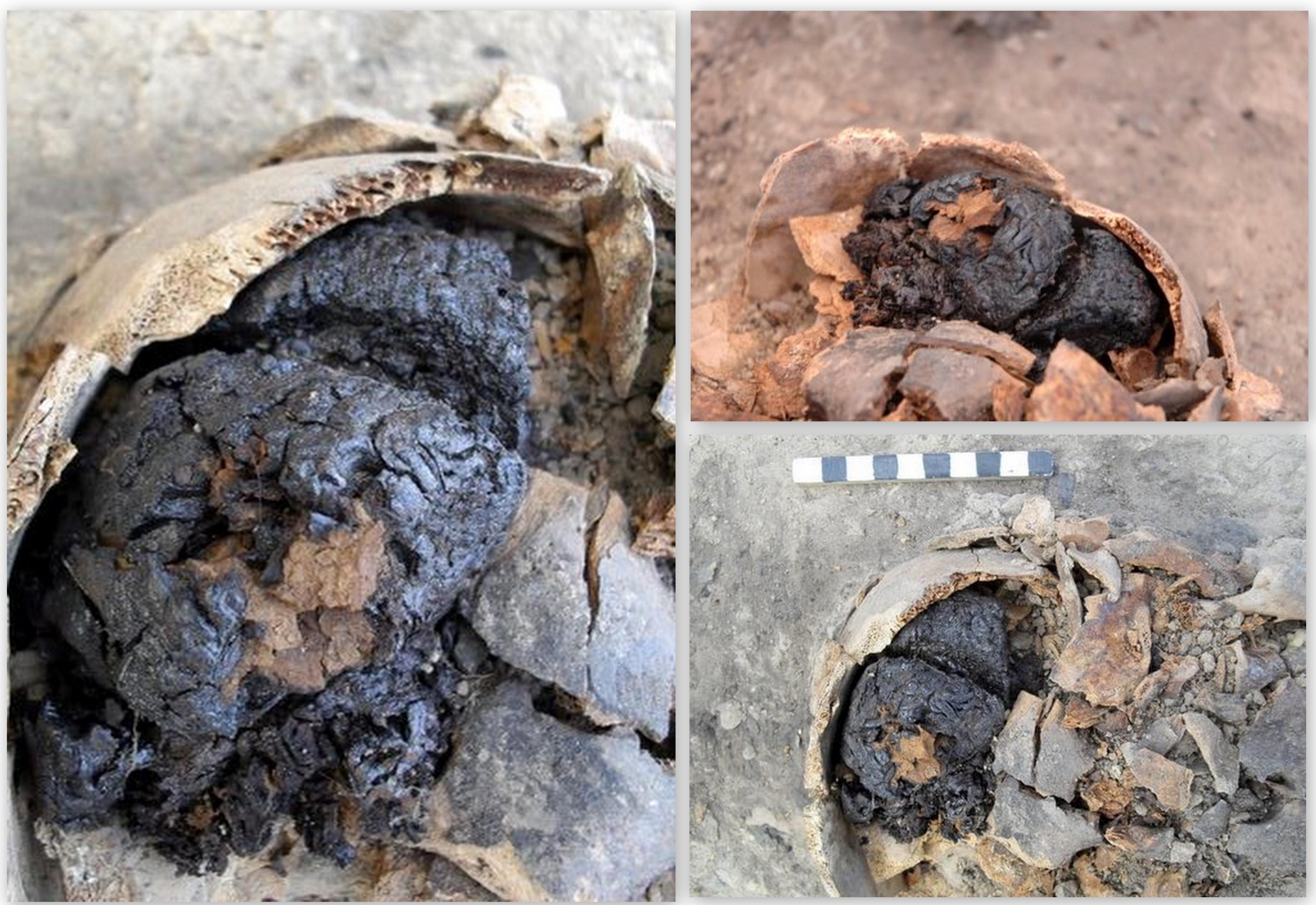 perierga.gr - Βρέθηκε ανθρώπινος εγκέφαλος ηλικίας 4.000 ετών!
