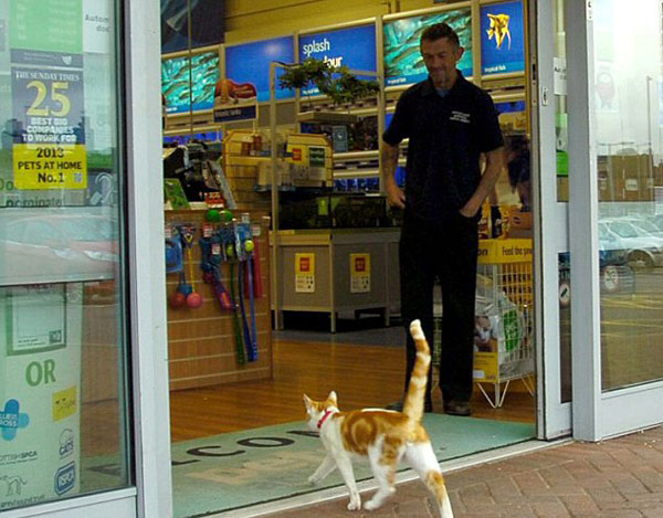 perierga.gr - Αξιαγάπητη γάτα πηγαίνει σε pet shop και… θαυμάζει ψάρια και ποντίκια!