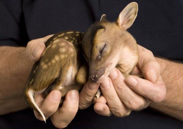 perierga.gr - Παγκόσμια Ημέρα των Ζώων