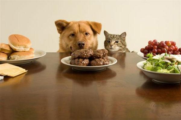 perierga.gr - Μη δίνετε ό,τι τρώτε στο κατοικίδιό σας!