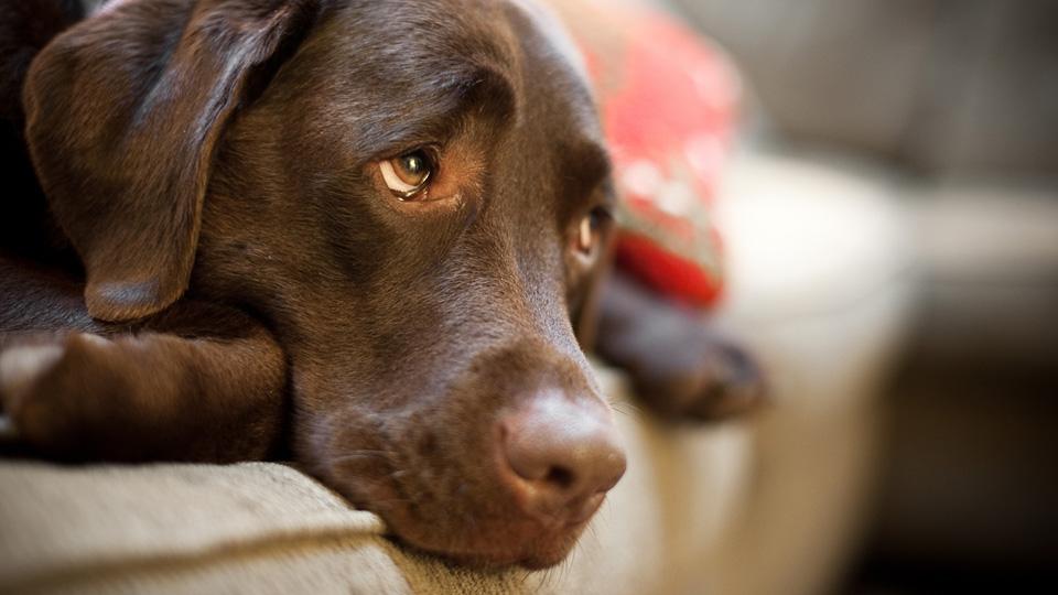 perierga.gr - Τα σκυλιά έχουν ανθρώπινα συναισθήματα!