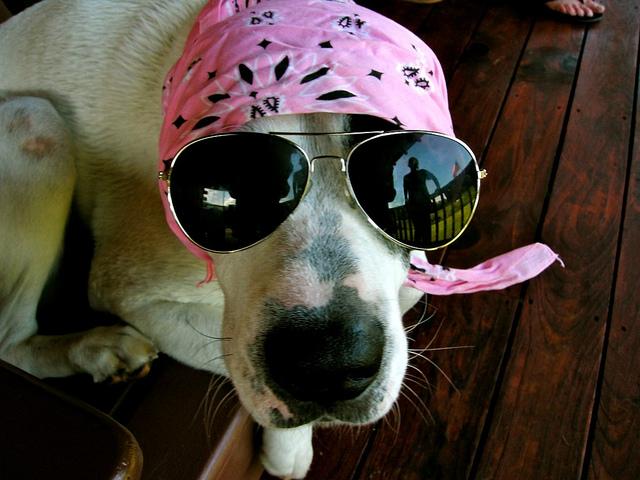 perierga.gr - Απίθανες φωτογραφίες σκύλων με τα… γυαλιά τους!