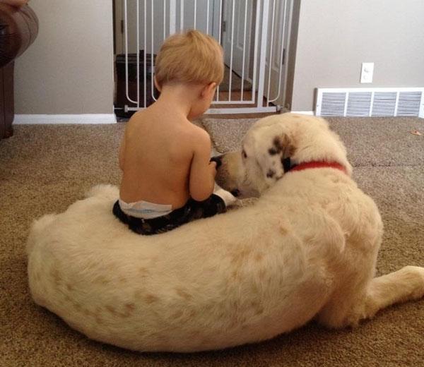 perierga.gr - Σκυλιά που είναι πραγματικά πολύ καλοί φίλοι!