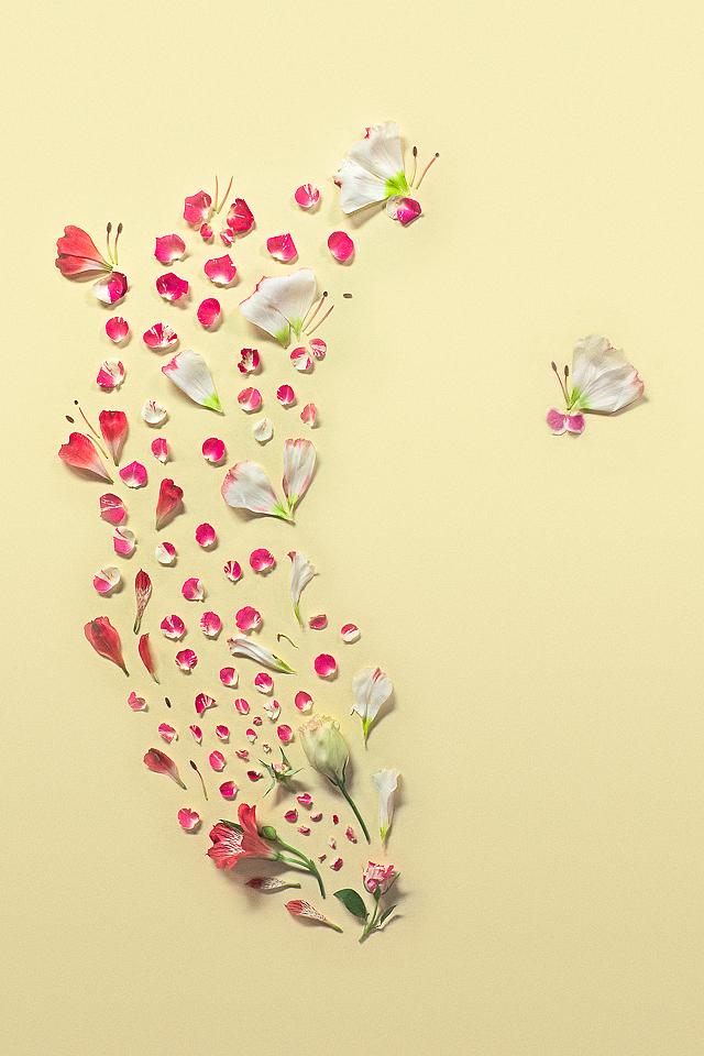 perierga.gr - Impressive artwork with flower petals!