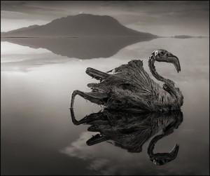 perierga.gr - Φονική λίμνη μετατρέπει τα ζώα σε απολιθώματα!