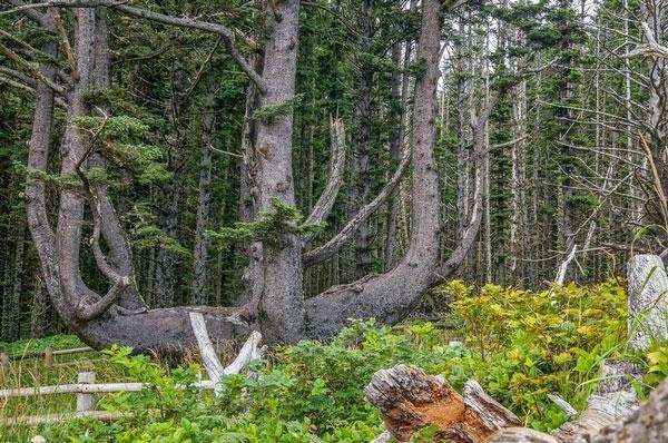 perierga.gr - Το παράξενο δέντρο… χταπόδι!