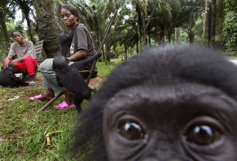 Perierga.gr - Οι πίθηκοι παρηγορούν ο ένας τον άλλον... ανθρώπινα