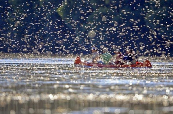 perierga.gr - Το μοναδικό θέαμα του ποταμού Tisza!