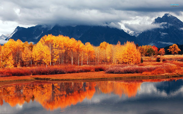 perierga.gr - H δύναμη του πορτοκαλί χρώματος στη φύση!