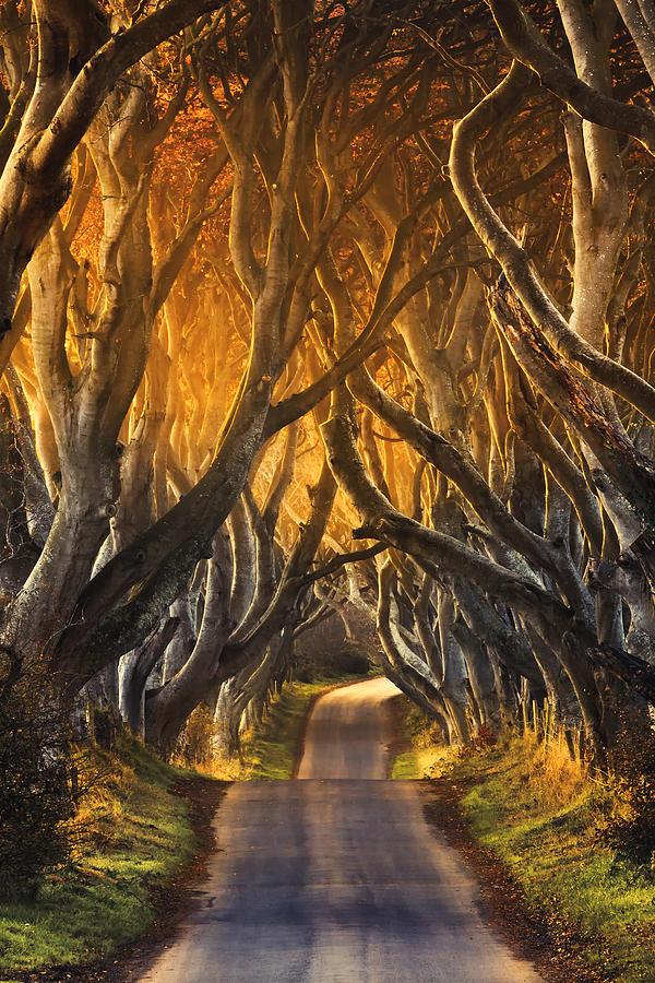 perierga.gr - Dark Hedges: Ένας παράξενος δρόμος!