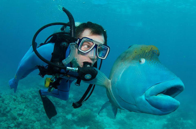 perierga.gr - Ψάρι ποζάρει... με χάρη στο φακό!