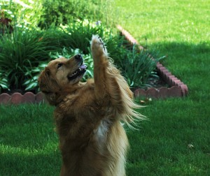 perierga.gr - Και οι σκύλοι κάνουν την... προσευχή τους! (βίντεο)