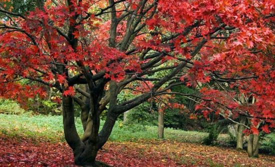 Perierga.gr - Χρυσός βρέθηκε σε φύλλα δέντρων...