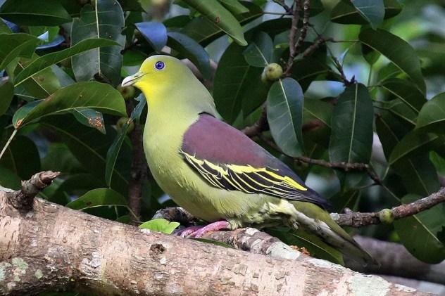 perierga.gr - 10 ζώα που είναι γνωστά από ένα και μοναδικό είδος!