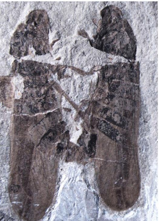 perierga.gr - H σεξουαλική συνεύρεση που διαρκεί 165 εκατομμύρια χρόνια!