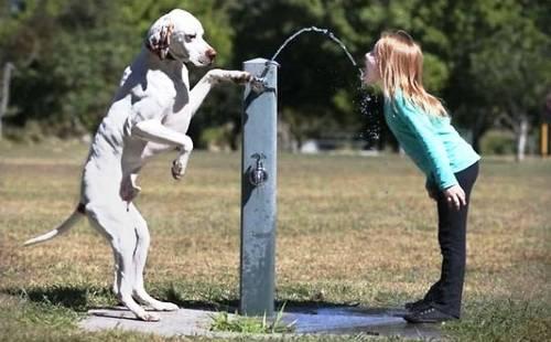 perierga.gr - Συγκινητικές εικόνες δείχνουν το δέσιμο των ανθρώπων με τα σκυλιά τους!