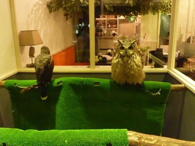 perierga.gr - Τα παράξενα cafes με κουκουβάγιες στην Ιαπωνία!