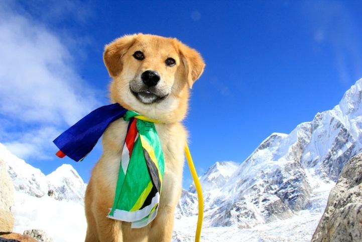perierga.gr - Ο πρώτος σκύλος στον κόσμο που ανέβηκε στο Έβερεστ!