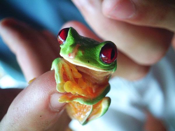 perierga.gr - Γλυκά λιλιπούτεια ζωάκια σε μέγεθος... δαχτύλου!