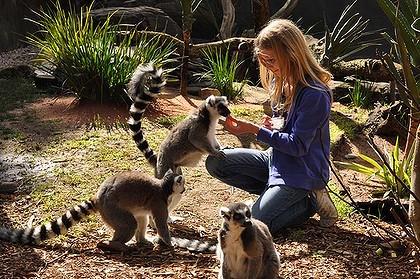 perierga.gr - Διαδραστικοί ζωολογικοί κήποι πέρα από τα συνηθισμένα!