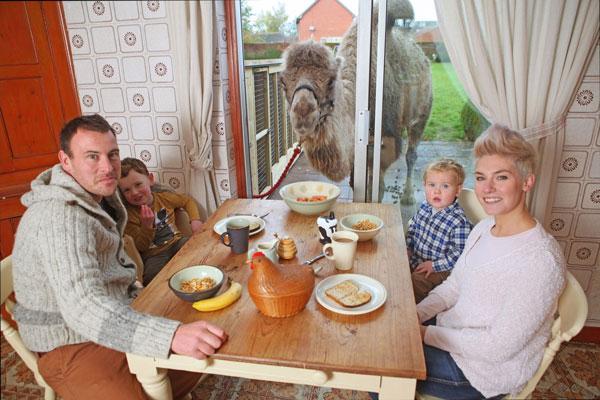 perierga.gr - Οικογένεια μοιράζεται το πρωινό της με μια... καμήλα!