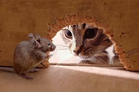 perierga.gr - Η μύτη μυρίζει τον κίνδυνο πιο γρήγορα από ό,τι ο εγκέφαλος!