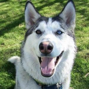 perierga.gr - Σκύλος χορεύει ντίσκο και το απολαμβάνει!