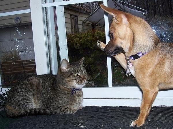 perierga.gr - Δεξιόποδα και αριστερόποδα σκυλιά & γάτες!