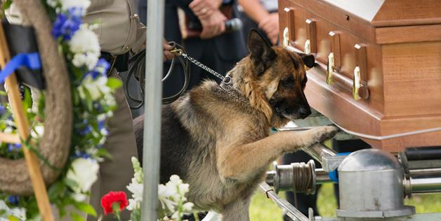perierga.gr - Συγκινητική φωτογραφία σκύλου στην κηδεία του αφεντικού του!