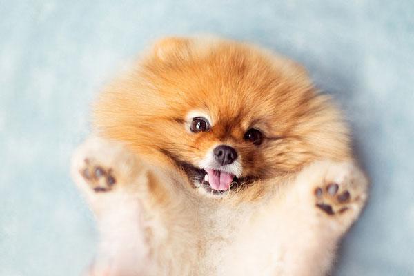 perierga.gr - Αξιαγάπητος σκύλος λατρεύει το φακό!