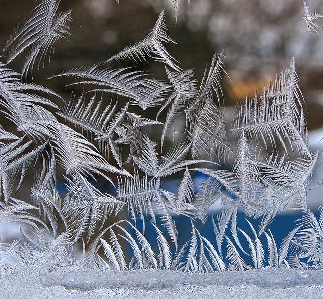 "perierga.gr - Απίθανα ""λουλούδια"" πάγου σε γυάλινη επιφάνεια!"