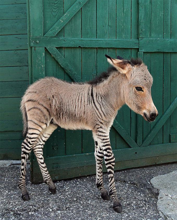 perierga.gr - 13 αξιαγάπητα ζώα που έκλεψαν τις καρδιές μας το 2013