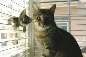 Χαριτωμένα ζωάκια φωτογραφίζονται με τη μαμά τους!