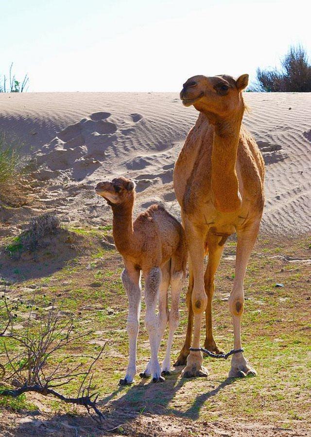 perierga.gr - Χαριτωμένα ζωάκια φωτογραφίζονται με τη μαμά τους!