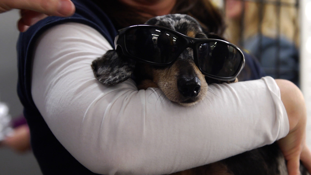 perierga.gr - Θαρραλέος σκύλος δίνει μάθημα ζωής!