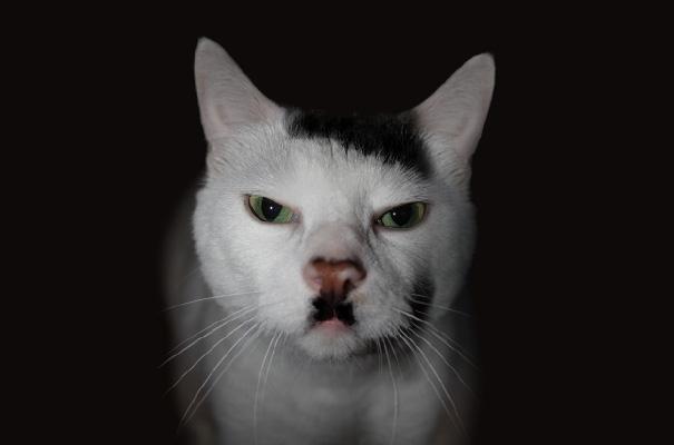 perierga.gr - Ζώα με… μουστάκι!