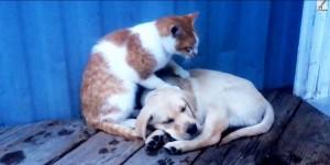 perierga.gr - Οι γάτες είναι εκπληκτικές... μασέρ για σκύλους! (βίντεο)