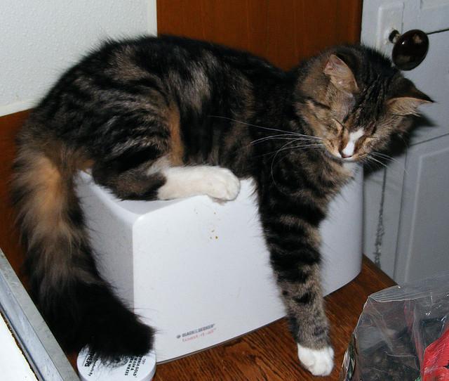perierga.gr - Γάτες πιάστηκαν... στον ύπνο!