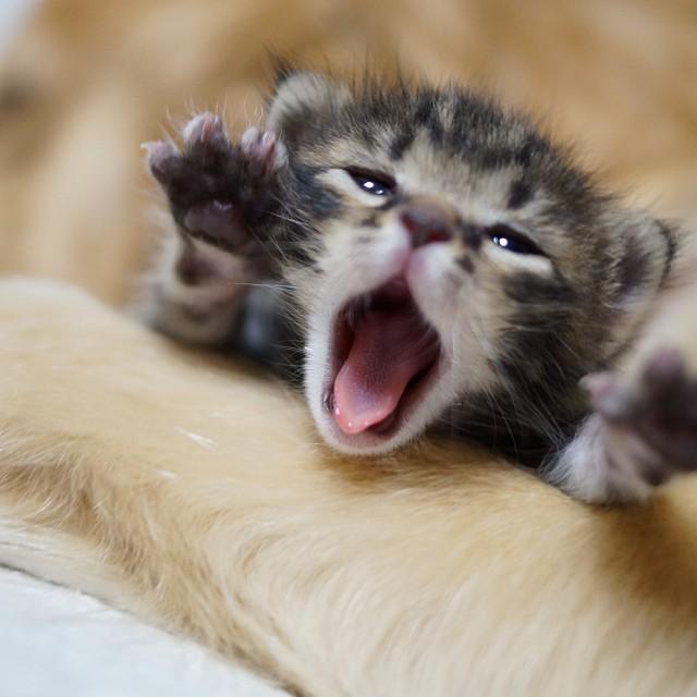 perierga.gr - Αδέσποτο γατάκι βρήκε θαλπωρή στην αγκαλιά ενός σκύλου!
