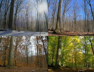 perierga.gr - Οι εποχικές αλλαγές του δάσους σε ένα απίθανο βίντεο!