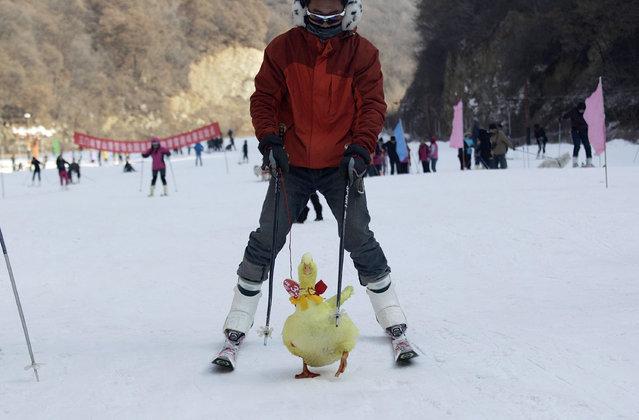perierga.gr - Οι ιδιοκτήτες κάνουν σκι με τα κατοικίδιά τους!