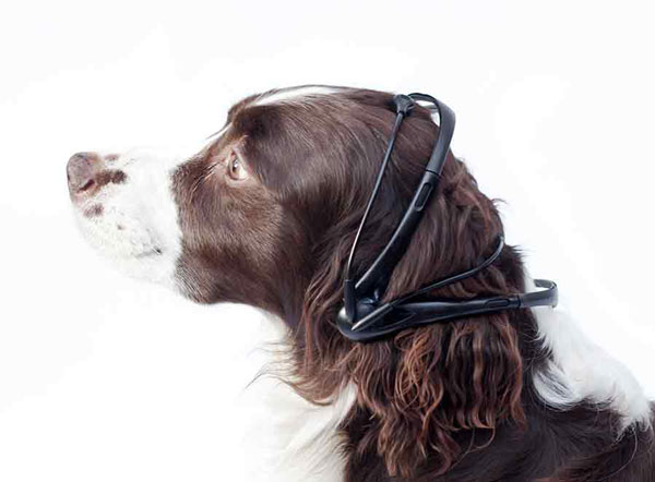 perierga.gr - Τον Απρίλιο κυκλοφορεί ο πρώτος «σκυλομεταφραστής»! (βίντεο)