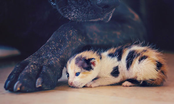 perierga.gr - To «μικρό θαύμα» της ζωής!