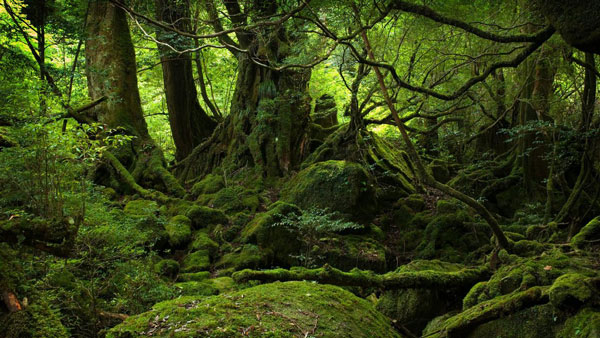 perierga.gr - Τα δέντρα αναπτύσσονται γρηγορότερα όσο γερνάνε!
