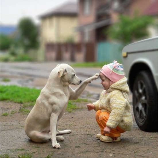 perierga.gr - Τα ζώα είναι οι καλύτερες... νταντάδες!