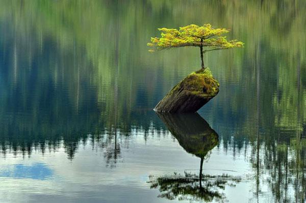 perierga.gr - Το μικρό δεντράκι της λίμνης!