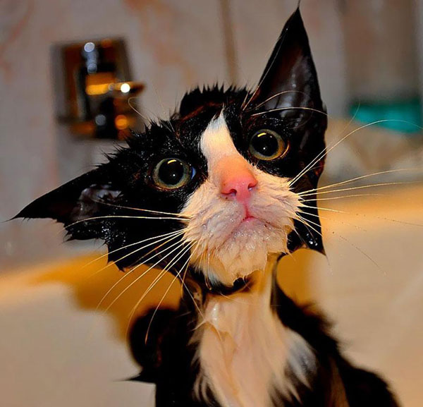 perierga.gr - Σαν… βρεγμένη γάτα!
