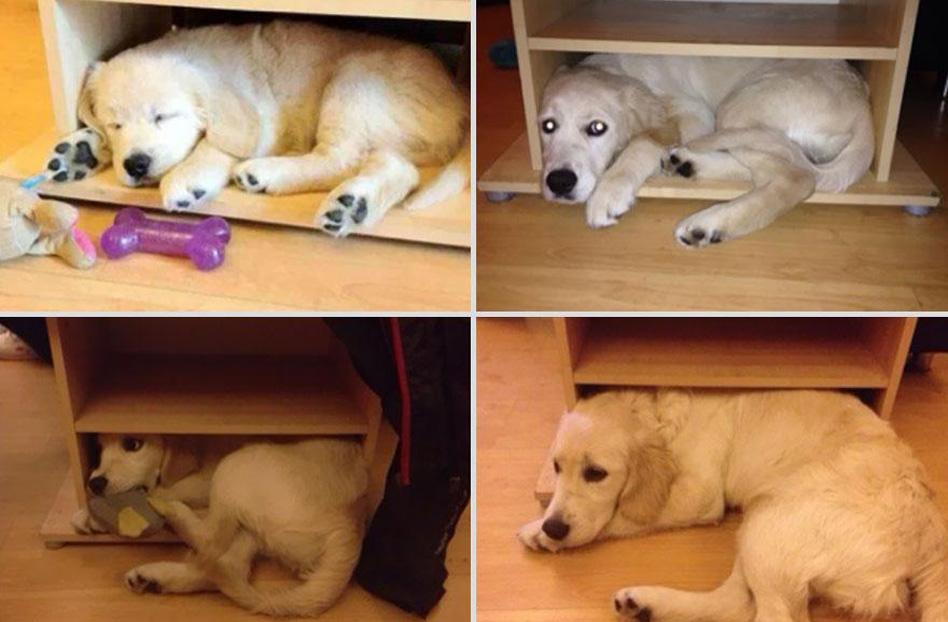 perierga.gr - Τα ζώα μεγαλώνουν με τους ιδιοκτήτες τους!