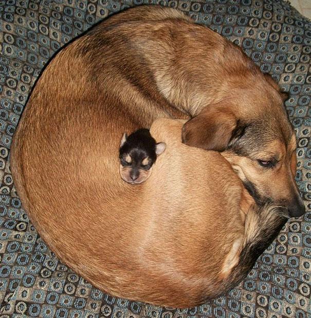perierga.gr - Ζώα χρησιμοποιούν άλλα ζώα σαν… μαξιλάρι!